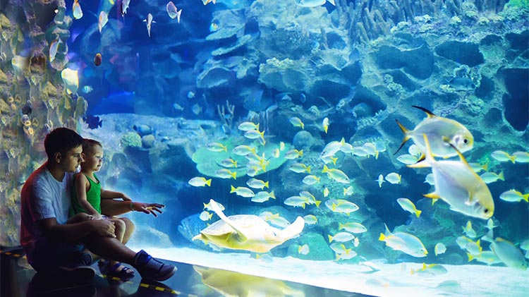 Genova and the Aquarium