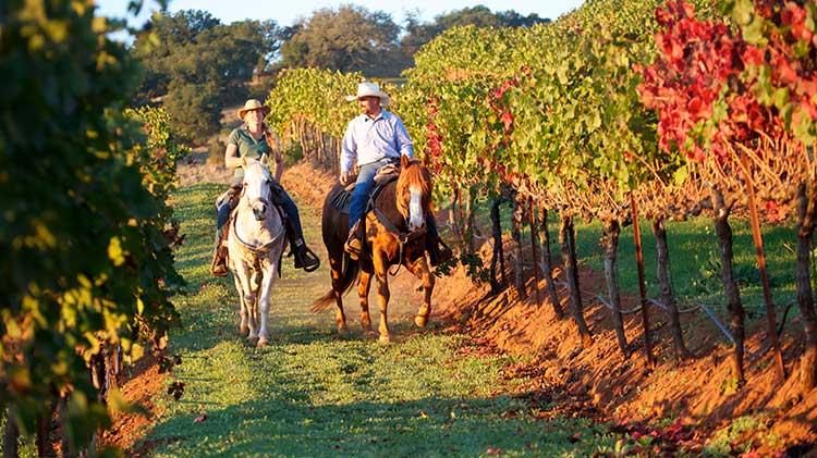 BOSS Horseback Riding