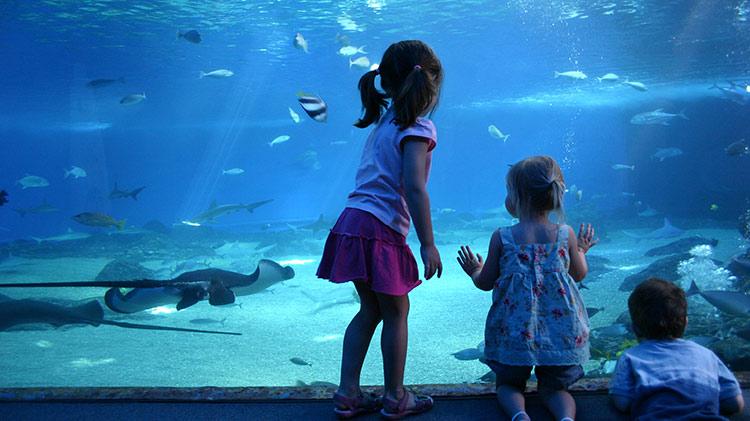 Darby Aquarium Trip to Genova