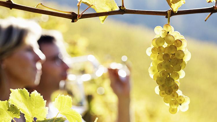 Wine Down Wednesday: Villa Canestrari & Bonamini